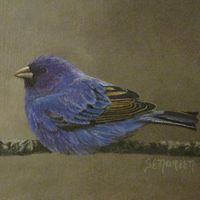 Susan Noreen's Bird Painting